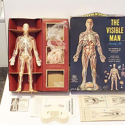 visible man model instructions