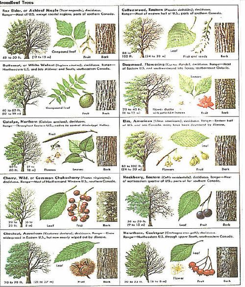 Tree seed pod identification guide