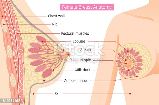 Female anatomy pictures images photos pdf