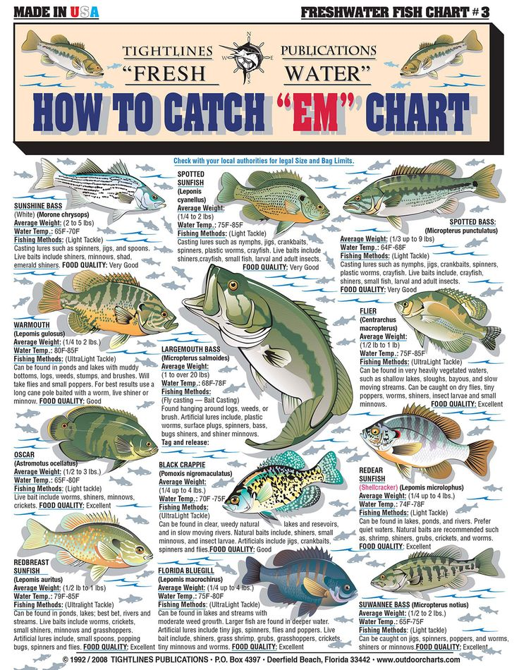 Freshwater fishing tips and techniques pdf